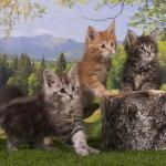 kittens in forest
