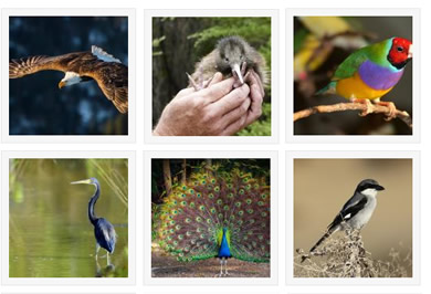 Bird Speciies Gallery