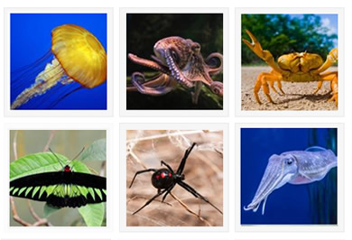 Invertebrates Species Gallery