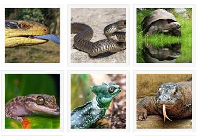 Reptiles Species Gallery