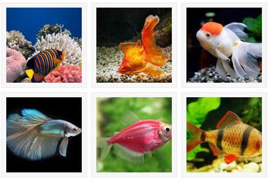 Aquatic Pets