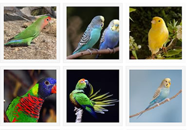 Bird Pets Photos