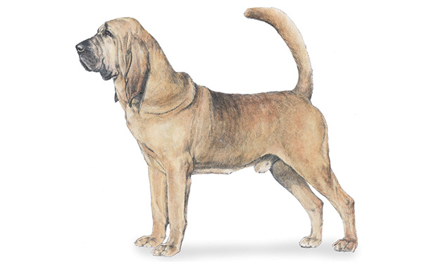 Dog Breeds | List Of Dog Types | Pets | Discover Animals
