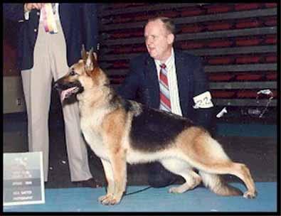German Shepherd Dog Discover Animals