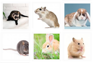 Small Animals Discover Animals